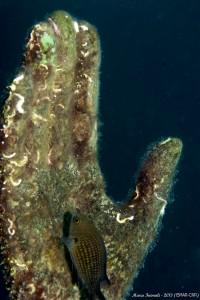 Immagine della mano del Cristo degli Abissi prima dell'intervento di pulizia