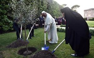 Francesco pianta l'ulivo